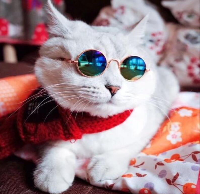 Creative Photogenic Cats Glasses Tools Sunglasses Round Metal Frame Trendy Pet Sunglasses